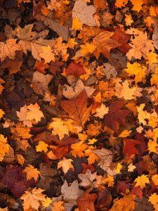Celebrate fall break at Sparkles in Hiram!